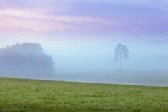 Sosna w mglistym krajobrazie Fotografia Stock