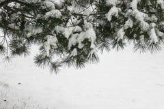 sosna zakrywający lasowy śnieg ilustracja wektor
