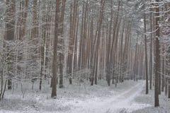 Sosnowa lasowa droga zakrywająca z śniegiem zdjęcie stock