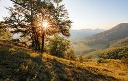 Sosnowa lasowa wiosna Zmierzch Obrazy Royalty Free