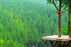 Sosnowa lasowa zieleń z natury nieba drzewa drewnem Fotografia Stock
