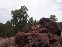 Sosnowa lawy skała Zdjęcia Stock