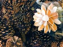 Sosnowe rożek świerczyny z drewnianym kwiatu rocznika wystroju fotografii obrazkiem zdjęcia royalty free