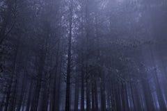 Sosnowi drewna przy nocą Obraz Stock