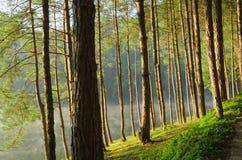 Sosnowi lasy i jeziora Obraz Stock