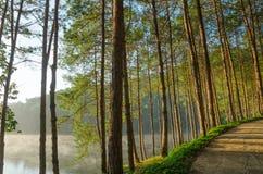 Sosnowi lasy i jeziora w ranku przy ssanie w żołądku Ung, Tajlandia Obraz Stock