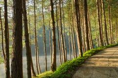 Sosnowi lasy i jeziora w Tajlandia Fotografia Stock