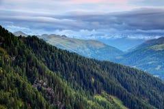 Sosnowi lasy w Carnic i Gailtal Alps z śnieżnym Hohe Tauern zdjęcia royalty free