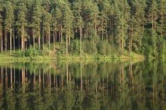 sosnowy drewna Fotografia Stock