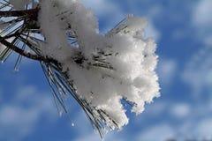 Sosnowy konar Zakrywający w śniegu Przeciw niebieskiemu niebu fotografia royalty free
