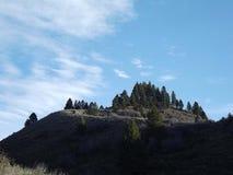 Sosnowy korony Butte Obraz Royalty Free