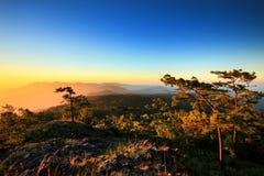 Sosnowy las na górze z niebieskie niebo zmierzchem, tropikalny las deszczowy, Tajlandzki Obrazy Royalty Free