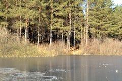 Sosnowy las na spokojnym jeziorze zdjęcie royalty free