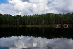 Sosnowy las obok jeziora Obrazy Stock