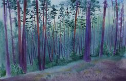 Sosnowy las przy półmrokiem Obrazy Royalty Free