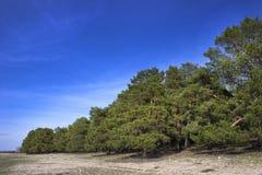 Sosnowy las w wiosna jasnym dniu Zdjęcia Royalty Free