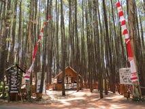 SOSNOWY las w YOGYAKARTA obrazy stock