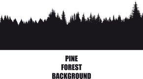 Sosnowy lasowy tło Zdjęcie Stock