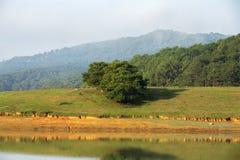 Sosnowy lasu krajobraz w ranku Zdjęcie Stock
