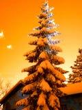 Sosnowy śnieg Fotografia Royalty Free