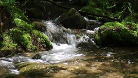 Sosnowy Rzeczny spływanie Przez mech Zakrywającej skały zdjęcie wideo