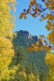 Sosnowy wzgórze Obramiający Złocistym Apsens Obraz Stock