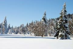sosny śnieżne pokrycia zdjęcie stock