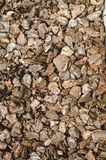 Sosny barkentyna acorns jesień tła granicy projekta lasowy dębowy światło słoneczne Obraz Stock