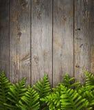 Sosny Drewna Tło Zdjęcia Stock
