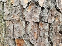 Sosny góry Pólnocna Karolina tekstury skalista barkentyna Obraz Royalty Free