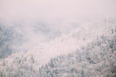 Sosny I świerczyna, jedliny Zakrywali Pierwszy śnieg W Greenwood lesie zdjęcie stock
