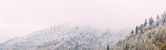 Sosny I świerczyna, jedliny Zakrywali Pierwszy śnieg W Greenwood lesie zdjęcia royalty free