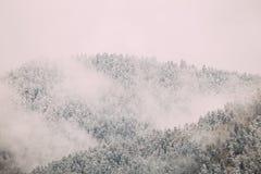 Sosny I świerczyna, jedliny Zakrywali Pierwszy śnieg W Greenwood lesie zdjęcie royalty free