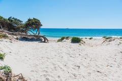 Sosny i biały piasek w Maria Pia wyrzucać na brzeg zdjęcia royalty free