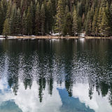Sosny, jodły i sekwoi las na jeziorze, Obraz Royalty Free