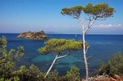 sosny krajobrazowe Zdjęcie Royalty Free