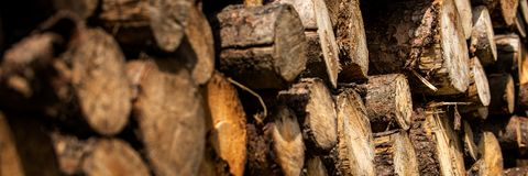 Sosny leśna eksploatacja Fiszorki i bele Overexploitation prowadzi wylesienie Szalunek wyróbki przemysł fotografia stock