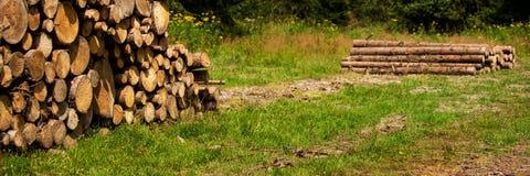 Sosny leśna eksploatacja Fiszorki i bele Overexploitation prowadzi wylesienie Szalunek wyróbki przemysł obrazy stock