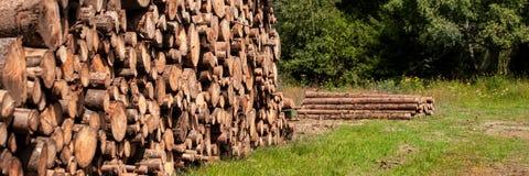 Sosny leśna eksploatacja Fiszorki i bele Overexploitation prowadzi wylesienie zagraża środowisko obrazy stock
