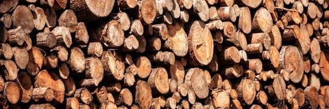 Sosny leśna eksploatacja Fiszorki i bele Overexploitation prowadzi wylesienie zagraża środowisko obrazy royalty free