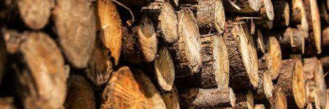 Sosny leśna eksploatacja Fiszorki i bele Overexploitation prowadzi wylesienie zagraża środowisko fotografia stock