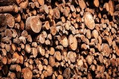 Sosny leśna eksploatacja Fiszorki i bele Overexploitation prowadzi wylesienie zagraża środowisko obraz royalty free