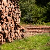 Sosny leśna eksploatacja Fiszorki i bele Overexploitation prowadzi wylesienie zagraża środowisko zdjęcie stock