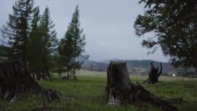 Sosny leśna eksploatacja w chmurnym ciemnym wieczór Fiszorki i bele pokazują że overexploitation prowadzi zbiory