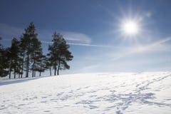 Sosny na śnieżnym wzgórzu na słonecznym dniu fotografia royalty free