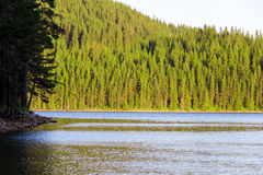 Sosny na jeziorze Obrazy Royalty Free
