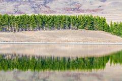 Sosny odbicie z jeziorem Zdjęcia Stock