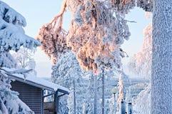 sosny parkowa zima Obraz Royalty Free