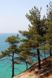 Sosny przy seashore w Gelendzhik, Rosja Obrazy Stock