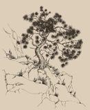 sosny skała ilustracja wektor